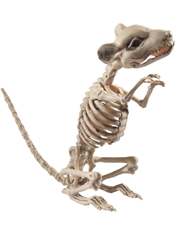 Rat Skeleton Prop, Natural, 9x28x33cm / 4x11x13in