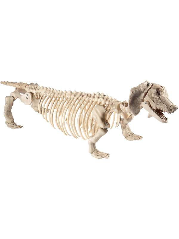 Dachshund Dog Skeleton Prop, Natural, 55cmx13cmx30cm / 22inchx5inchx12inch