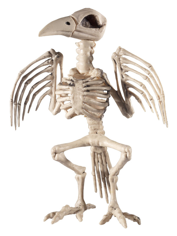 Raven Skeleton Prop, Natural, 21x20x30cm / 8x8x12in