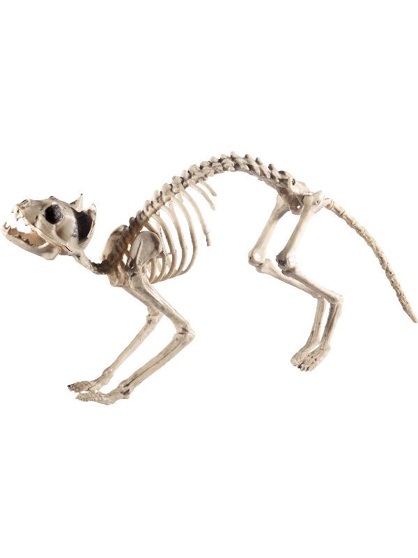 Cat Skeleton Prop, Natural, 60x12x25cm / 24x5x10in